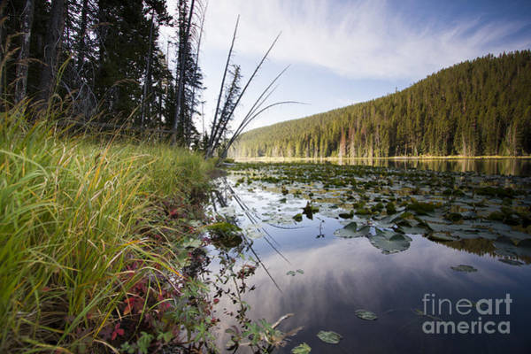 Wall Art - Photograph - Yellowstone Park Reflections by Dustin K Ryan