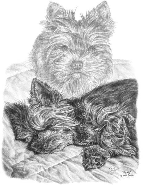 Drawing - Yorkie - Yorkshire Terrier Dog Print by Kelli Swan