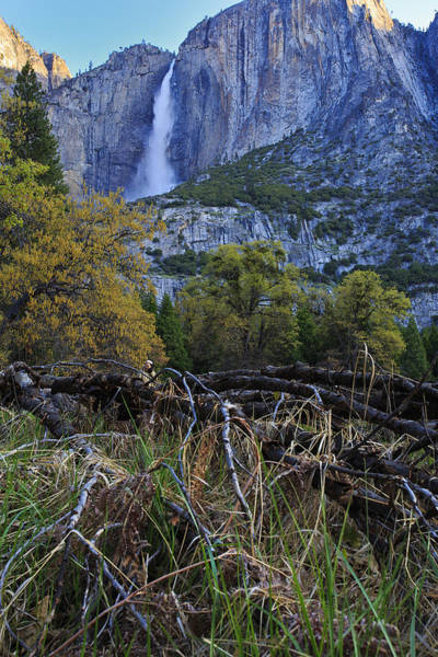 Photograph - Yosemite Falls From The Valley Floor by Rick Berk