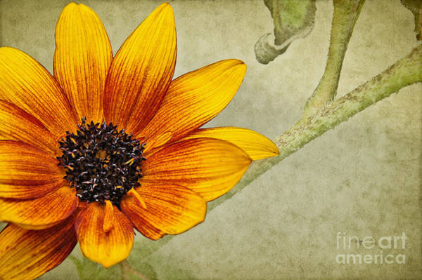 Photograph - You Are My Sunshine by Lois Bryan