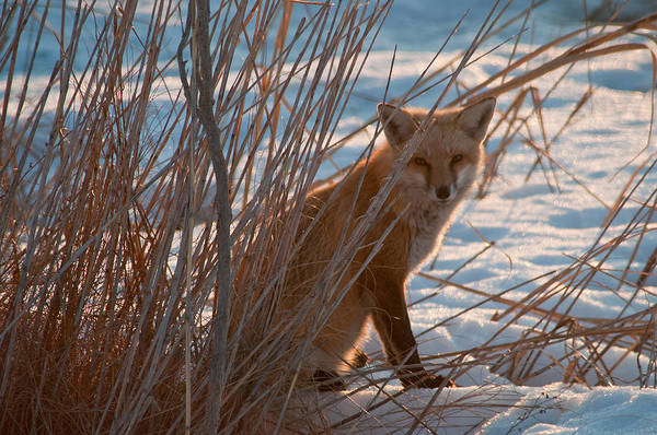 Photograph - You Can't See Me by Craig Leaper
