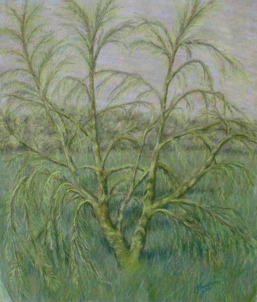 Wall Art - Pastel - Young Willow by Joann Renner