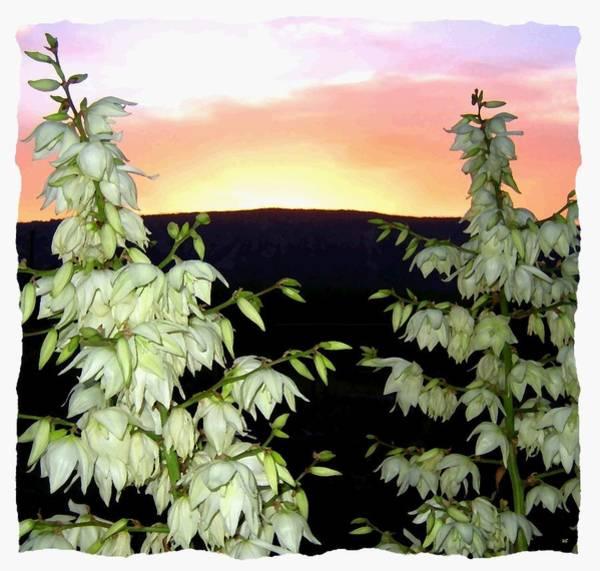 Okanagan Valley Digital Art - Yucca Blossoms At Sundown by Will Borden