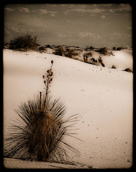 Photograph - White Sands, New Mexico - Yucca by Mark Forte