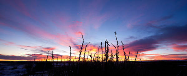 Photograph - Yucca Sunrise by Adam Pender