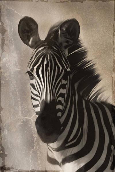 Straight Ahead Wall Art - Photograph - Zebra Left by Nichon Thorstrom