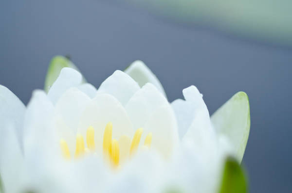 Photograph - Zen by Margaret Pitcher