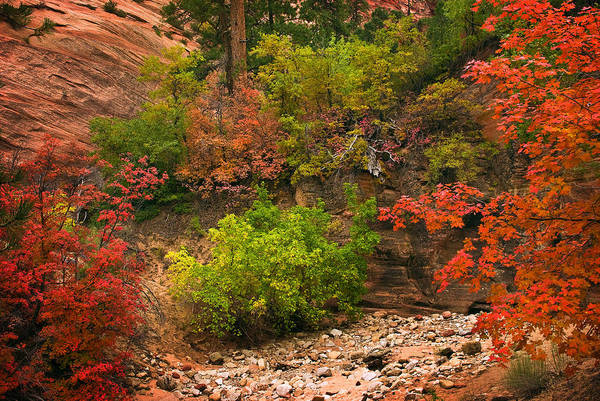 Photograph - Zion Fall Colors by Dave Dilli