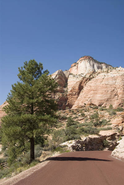 Wall Art - Photograph - Zion Mount Camel Highway by Gloria & Richard Maschmeyer