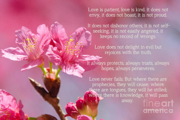 Photograph -  1 Corinthians 13 Love Is by Andrea Anderegg