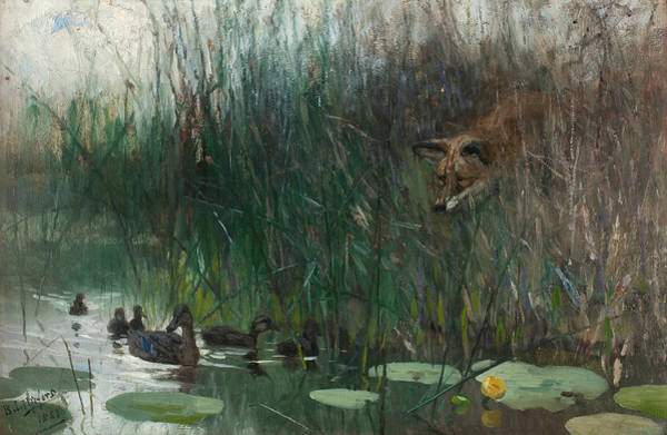 Swedish Painters Wall Art - Painting -  A Flock Of Ducks And A Sneaky Fox by Bruno Liljefors