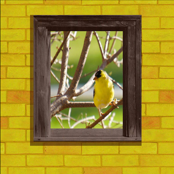 Wall Art - Digital Art -  American Goldfinch by Art Spectrum
