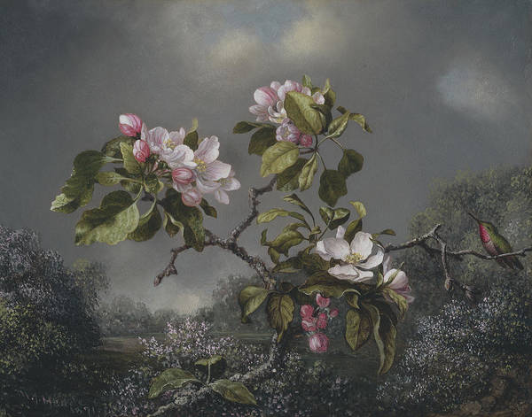 Humming Bird Wall Art - Painting -  Apple Blossoms And Hummingbird by Martin Johnson Heade