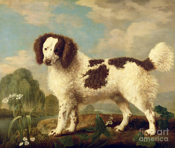 Pedigree Painting -  Brown And White Norfolk Or Water Spaniel by George Stubbs