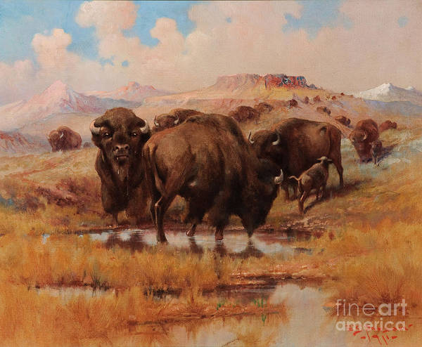 Painting -  Buffalo At A Watering Hole by Celestial Images