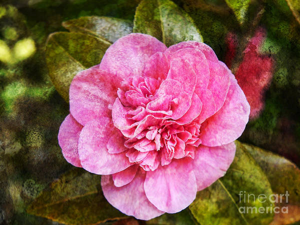 Photograph - Stained Glass Camellia by Brenda Kean
