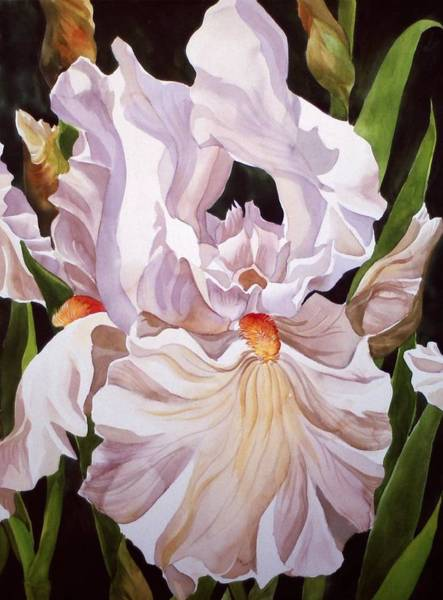 Painting -  Flower-white Iris by Alfred Ng