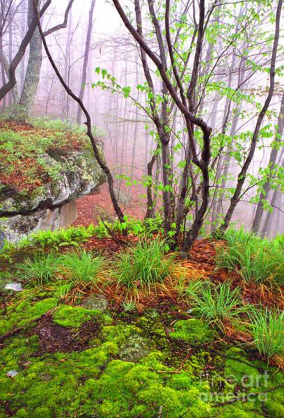 Foggy Spring Morning Art Print