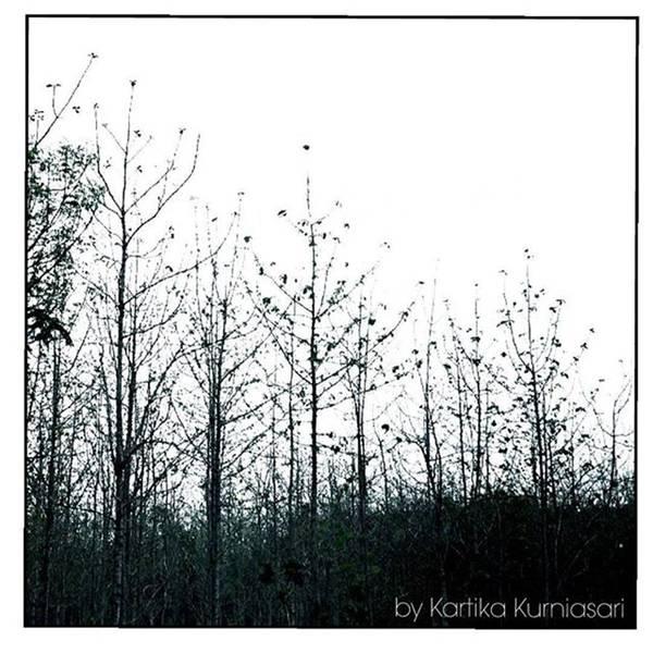 Minimalism Photograph - - Forest Simplicity-  by Kartika Kurniasari