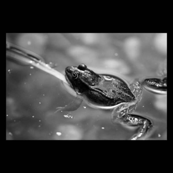 Monochrome Photograph - 🐸 Froschn. #frog #monochrome #bnw by Mandy Tabatt