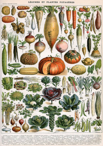 Wall Art - Painting -  Illustration Of Vegetable Varieties by Alillot