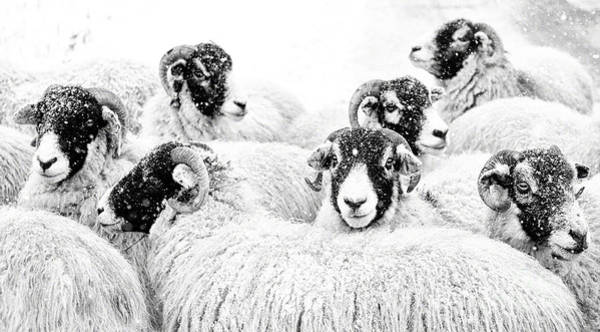 Farms Photograph -  In Winters Grip by Janet Burdon