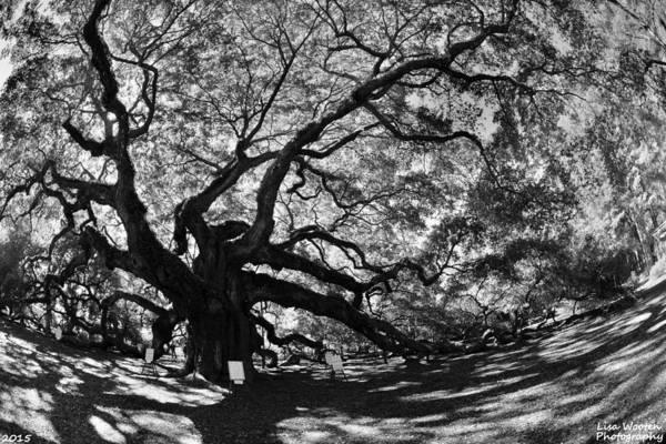 Photograph -  Johns Island Sc Angel Oak Black And White by Lisa Wooten