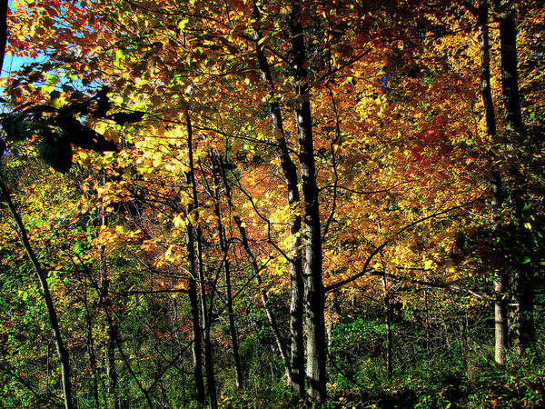 Photograph -  Michigan Fall Colors 2  by Scott Hovind