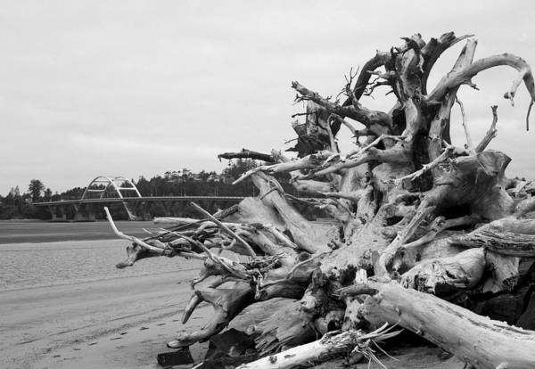 Photograph -  Natures Own Wood Sculpture by HW Kateley