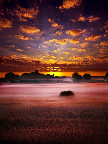 Natur Wall Art - Photograph -  Quiescent  by Phil Koch