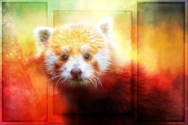 Photograph -  Red Panda Textures by Alice Gipson