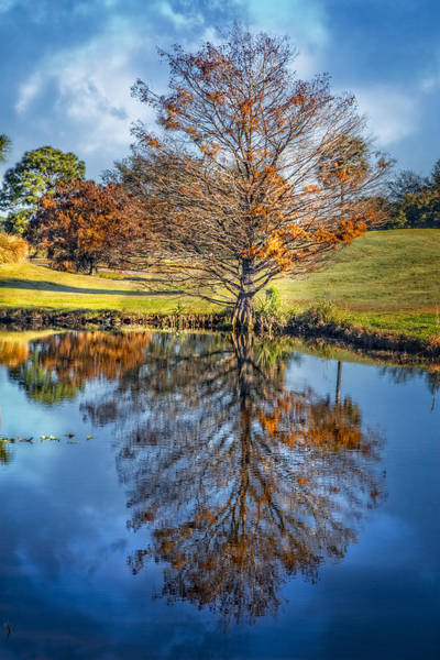 Okeeheelee Park Photograph -  Reflections by Debra and Dave Vanderlaan