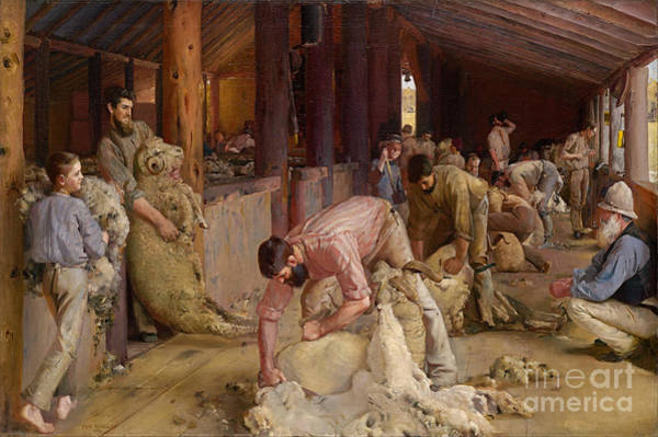 Painting -  Shearing The Rams by Celestial Images