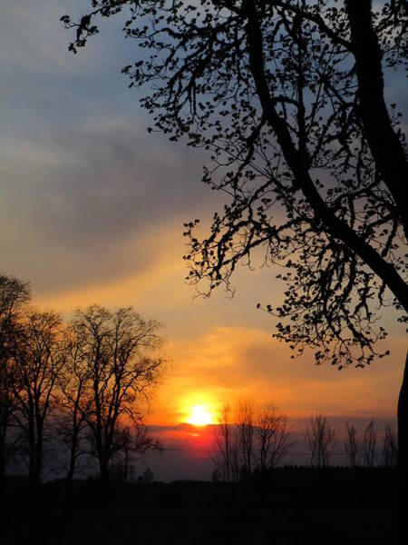 Photograph -  Silhouetted Against The Sky by Rosita Larsson