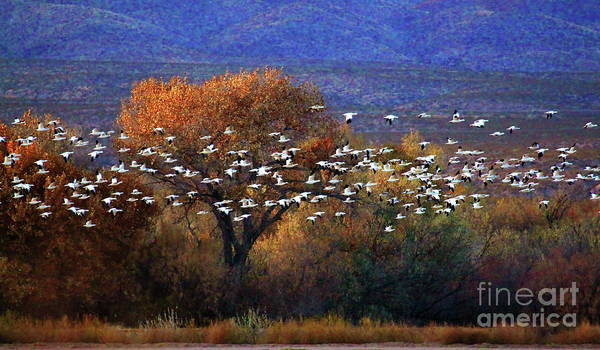 Wall Art - Photograph -  Snow Geese Swarm by Tom Cheatham