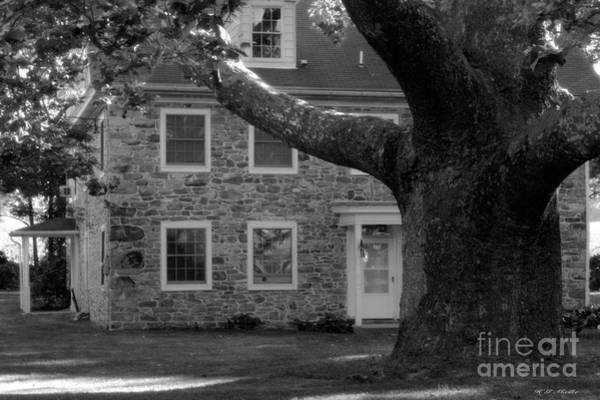 Wall Art - Photograph -  Stone House And A Large Sycamore Tree by Heinz G Mielke