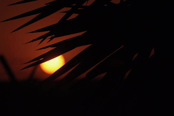 Photograph -  Sun Aand Leafs by Cliff Norton