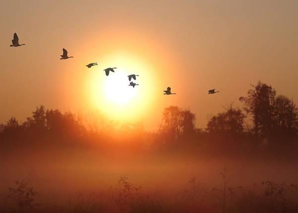 Marsh Bird Digital Art - Returning South by I\'ina Van Lawick