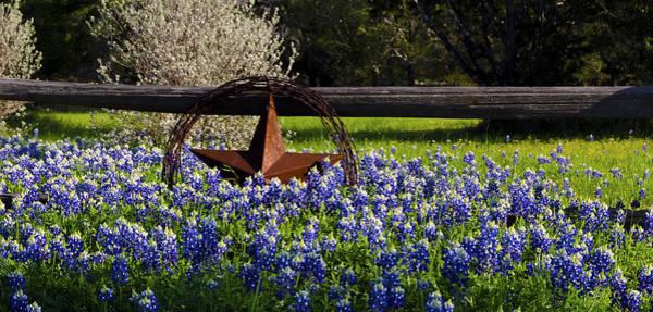 Photograph -  Texas Bluebonnets IIi by Greg Reed