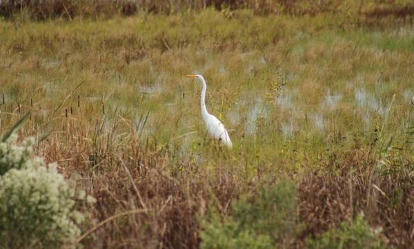 Wall Art - Photograph -  The Egret And The Fall by Valia Bradshaw