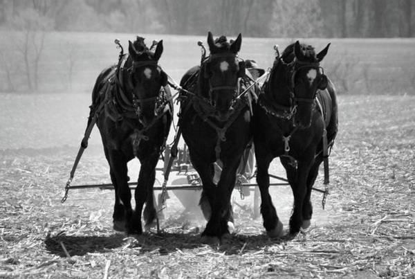 Photograph -  Tres Amigos 1634 by Guy Whiteley