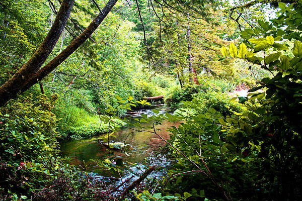 Digital Art -  Usnf - One Of Many Creeks  by Joseph Coulombe