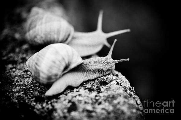 Photograph -  Where We Will Go? Snail Escargot Artmif by Raimond Klavins