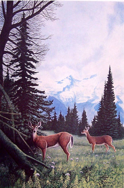 Wall Art - Painting -  Whitetails At Mount Ranier by Ken Hollerbach