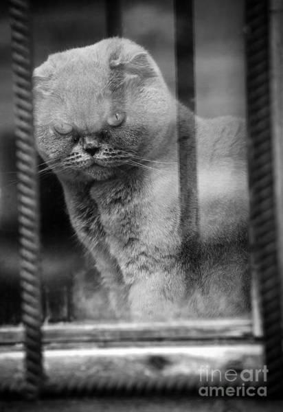 Photograph -  Window #2641 by Andrey  Godyaykin