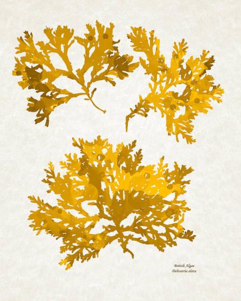 Impression Mixed Media - Yellow Gold Seaweed Art Delesseria Alata by Christina Rollo