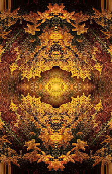 Kaleidoscopes Photograph - 011 by Phil Koch