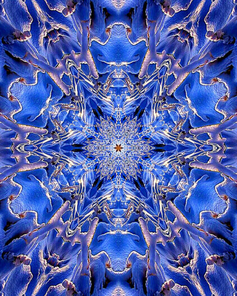 Kaleidoscopes Photograph - 020 by Phil Koch