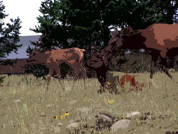Digital Art - 05012015 Elk Yearling by Garland Oldham