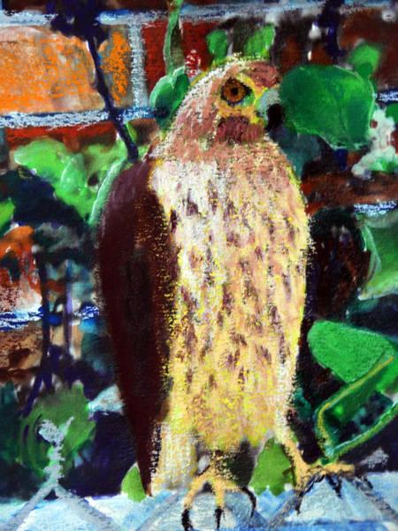 Pastel - 081715 Sparrow Hawk by Garland Oldham